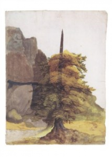 http://unahamiltonhelle.co.uk/files/gimgs/th-23_Duerer_Baum_Tree_Steinbruch_Quarry_AD149606_g_v2.jpg
